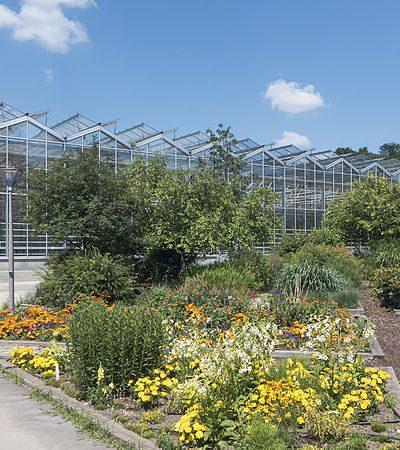 Die richtige Baumschule für Kirschlorbeer Pflanzen finden