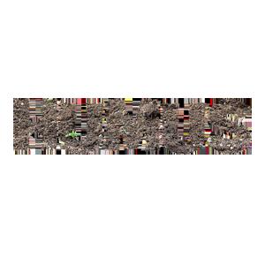 Was ist Humus? –  Diese 5 Dinge sollten Sie über Humus wissen